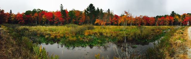 fall color pano